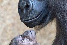 <3 gorila <3