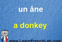 French Words / Learn French words and vocabulary. / by Annette Gilleron