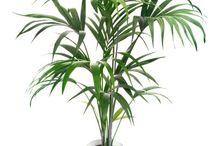 Αρθρο τελεια φυτα εσωτερικου χωρου
