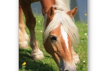 Horse and Pony Stuff / Pony, Horse, equine, Pferd, caballo, cavallo, cavalo, cheval, häst, hest, Pferde, fashion, present, mode