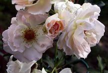 Nature - Fleurs et Topiaires