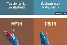 Myth n Truth