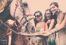 South Asian Weddings: Baraat