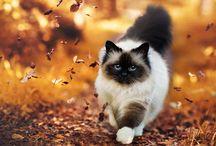 Моя любимая осень....Времена года...