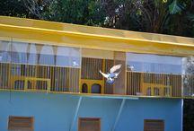 pigeon entrance