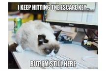 grumpy cat....makes me happy