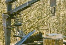 spart lemne