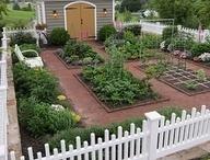Kitchen Garden...