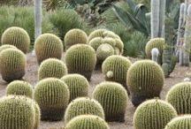 Planting - Succulent