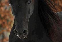 ~beautiful horse~