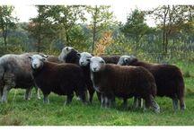 Zeldzame landbouwhuisdieren