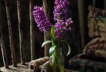 Hyacint - Jácint