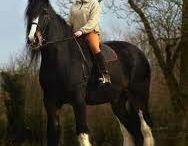 Biggest Horse in the World: Cracker