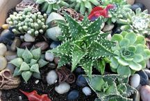 Miniature Play Gardens