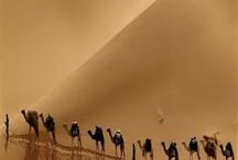 nomads in a desert