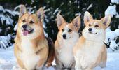 Dog / dogs