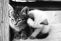 i want a kitten!