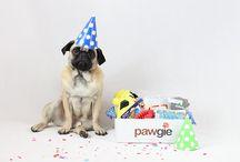 Dog Birthdays