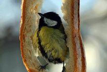 Świat Zwierząt / zwierzęta, ptaki, owady...