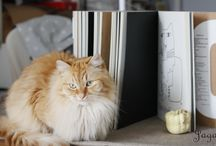 Henio i koty / Mój kot Henio i koty które przygarnęłam