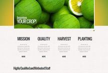 An outstanding set of templates you can't miss! / by FlashMint - Flash Website Templates