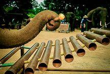 Het Thai Elephant Orchestra (olifantenorkest)