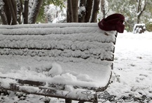Roma e la neve