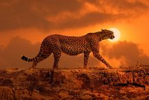 amazing fotos / animals landscapes people traveling