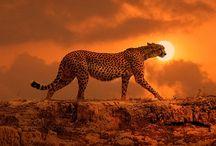 Cheetah Pins