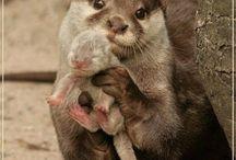 Otros animales preciosos