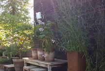 Altan trädgård nya huset