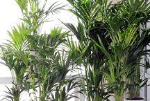 Zimmerpflanzen Dekoration