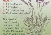 Lavender / by Candace Mixon