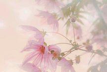 Artistic flowers