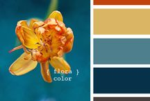 All about the color / Color concepts