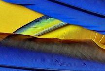 Blue-Gold-Yellow