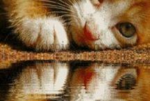 My Animals / by Debra Acord