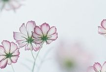 Flower Power :)