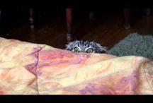 VIDEOS!! / Bunch of short videos. / by Snugglebunny Smith