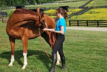 Helping Horses Recover from Injuries