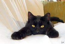 my baby love..black cat