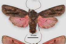 Moths, bugs & butterflies