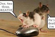 Funny laughs haha