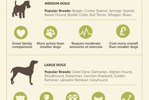 Preschool Animal Info