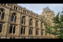 London: Natural History Museum.Muzeul de istorie Naturală din Londra.Музей естествознания в Лондоне.