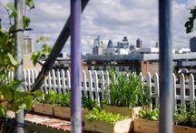 IJLA - London Festival of Architecture / Landscape Architecture