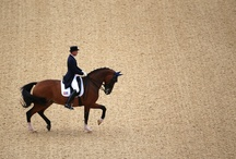 Tournaments / Dressage & Show Jumping