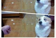 Naughty Dogs :)