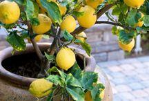 Grow fruit & Vedg in Pots