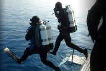 Submarinismo / Las fotos mas sorprendentes y curiosidades submarinas